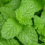 mint leaves trapped gas